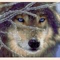 """Схема для вышивания бисером А.ТОКАРЕВА """"Волк"""""""