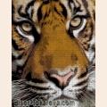 """Схема для вышивания бисером А.ТОКАРЕВА """"Тигр"""""""