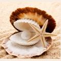 Алмазная вышивка квадратными камнями ГРАННИ «Морские дары»