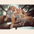 """Раскраска по номерам Royal & Langnickel """"Африканский леопард"""""""