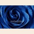 Алмазная вышивка квадратными камнями ГРАННИ «Синяя роза на воде»