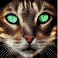 """Набор для вышивания бисером А.ТОКАРЕВА """"Кот"""""""